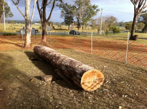 2 metre long and 200 year old ironbark log